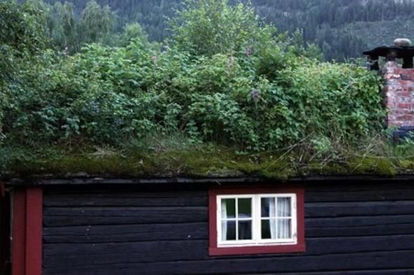 Green Roofs Scandinavian