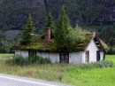 Norway Grass Roofs